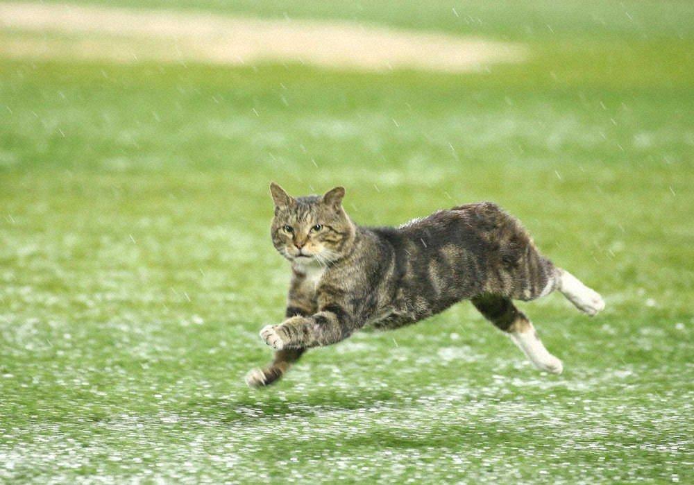 奔跑中的貓 EdIYIG4VcAIVyBs