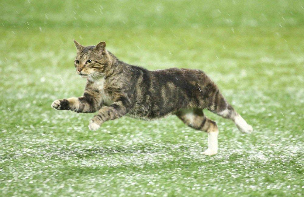 奔跑中的貓 EdIYIPuUcAARBgx