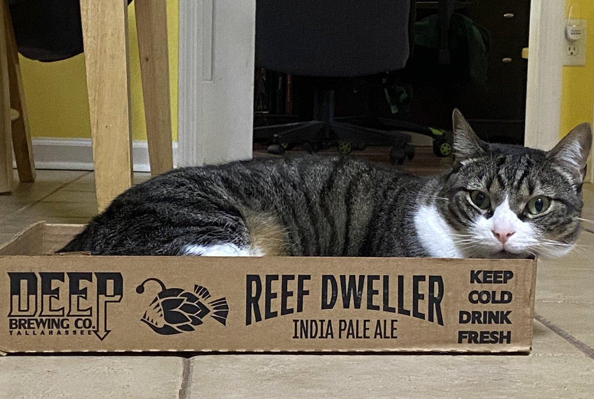 My little #beercat @CatsOnTap she loves @DeepBrew just like us @fsunole98 #reefdweller