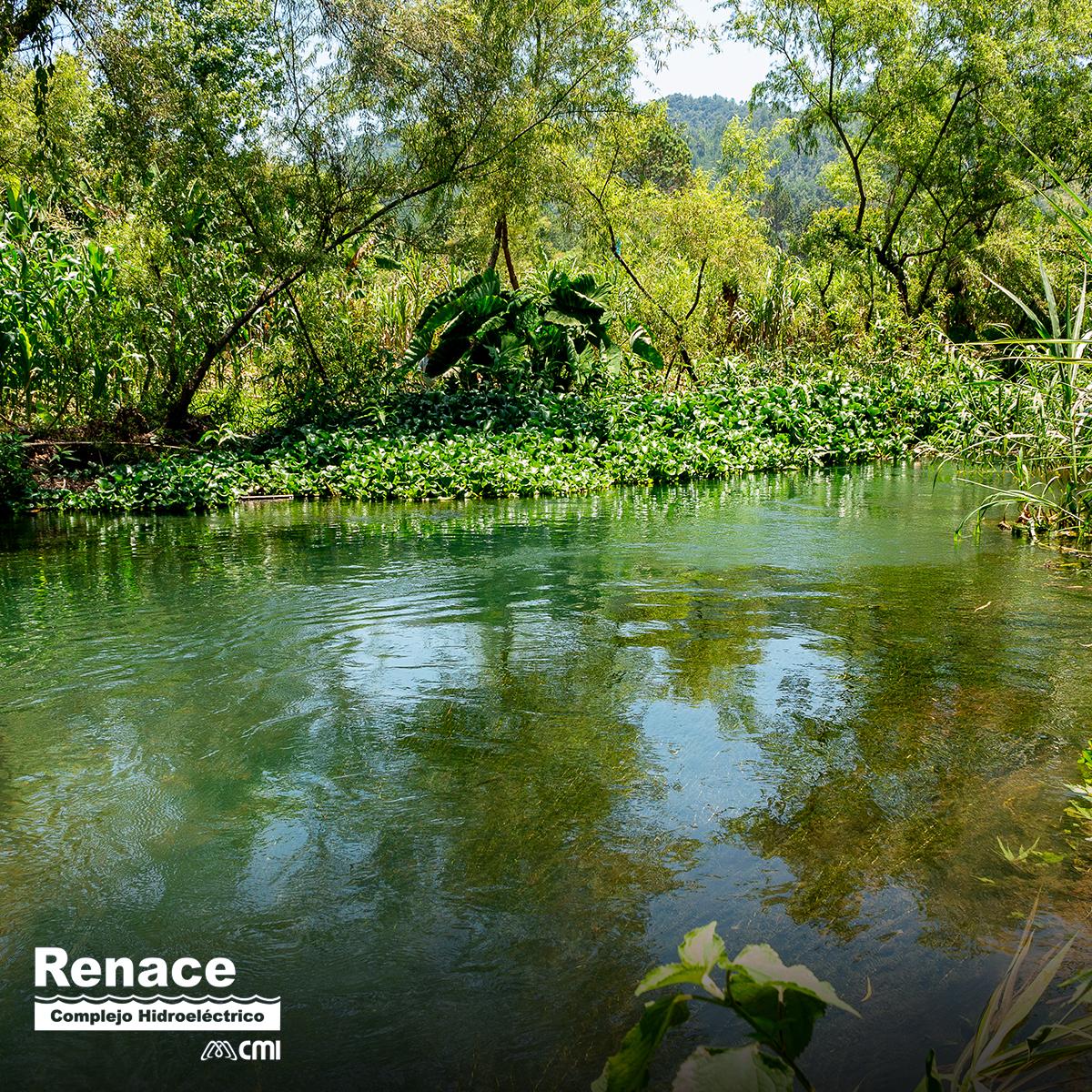 El desarrollo de la vida natural es garantizado por el agua del caudal ecológico, corriente del río que no pasa por la hidroeléctrica. ¿Sabías que Renace supera este compromiso en un 130%? #CompromisoAmbiental https://t.co/cKYdwyPPzU
