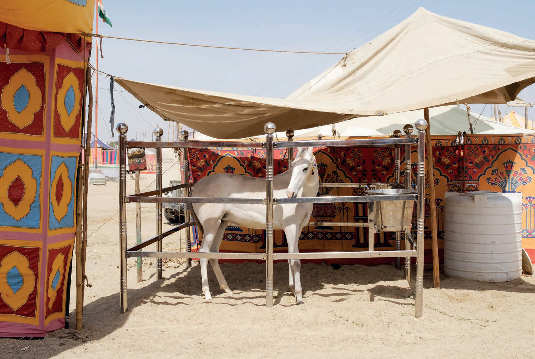 Redux Pictures On Twitter An Equine Odyssey In Ancient India Jennifer Osborne S Photo Story About Marwari Horses Is Featured In Athletamagazine Marwari Horses Are An Archaic Warhorse Linked To The Arabian Line