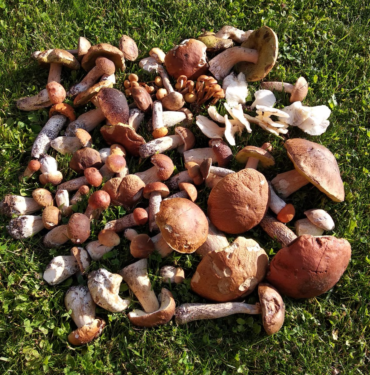Фото грибов в интернете