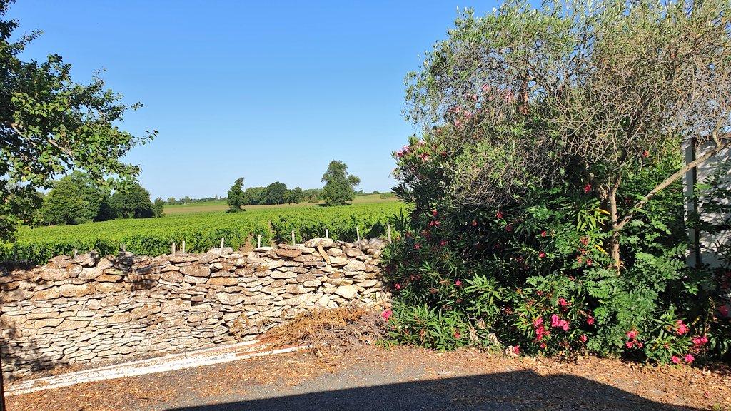 Bivouac au château Ferré, merci aux propriétaires 👍. Vue du salon. Magnifique paysage au milieu des vignes. #MagnifiqueFrance #familytravel