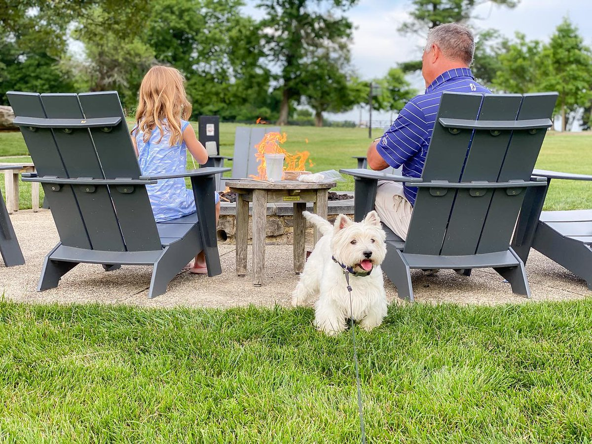 Did someone say s'mores?! #DogsofSalamander #dogs #dogfriendlyhotel #dogfriendly #dogtravel https://t.co/2AeD9K4HcN