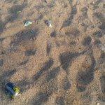 ビーチのゴミで一番困るのがコレ、砂に埋められて素足で踏むとケガする恐れも!