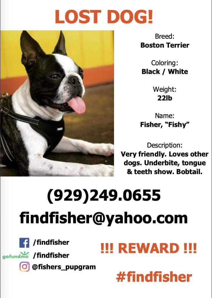#bostonterrier #bostonterriercult #bostonterrierlife #bostonterrierpuppy #bostonterrieroftheday #bostonterrier_feature #bostonterriersforever #bostonterrierlove #bostonterriersofinstagram #puppyoftheday #puppy #dog #missing #missingdog #findfisherpic.twitter.com/vkQPlJSlei