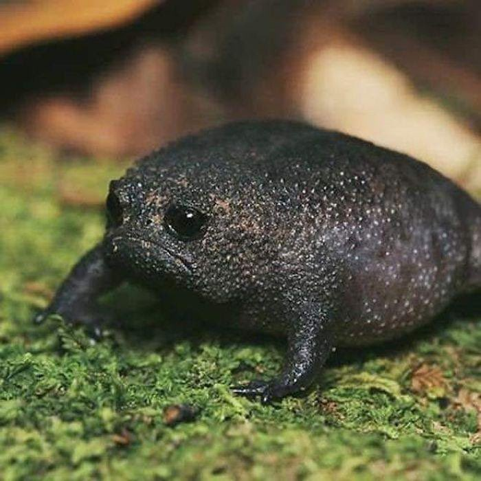 Is it me, or does this frog look like a really sad avocado? https://t.co/mcaiC6Em8H