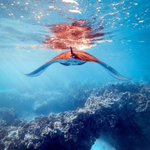 Image for the Tweet beginning: The extraordinary underwater world of