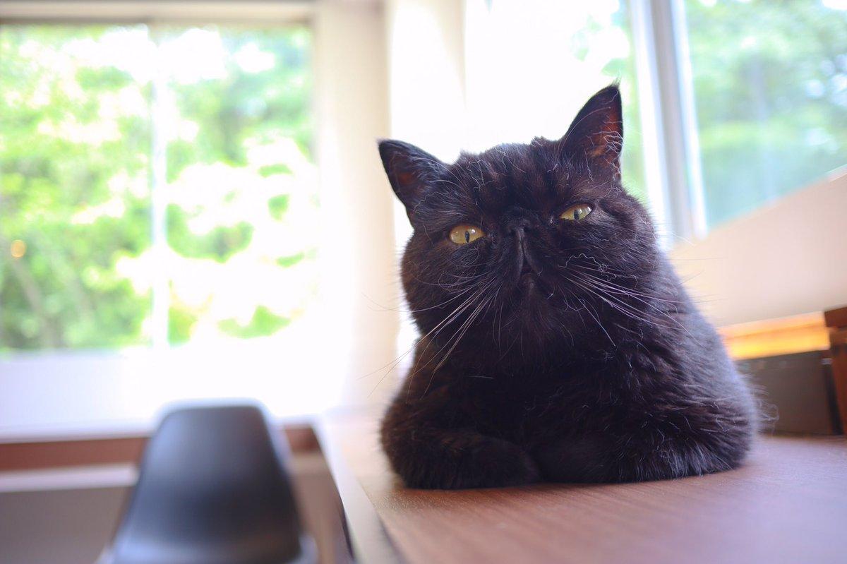 全ての写真が上手く撮れるとは限らないんだぜ!  (それに自分が好きだなって思ったものを撮れば良いんじゃないかな!なんてね!)  #猫写真 #失敗写真 https://t.co/L3MHqIPFNG