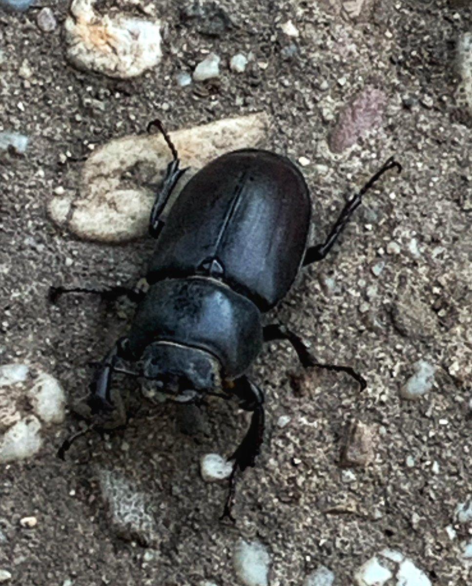New friend... #beetle #bug #brouk #novykamos #setkání #ji70photouniverse https://t.co/ChAEjZSTEw