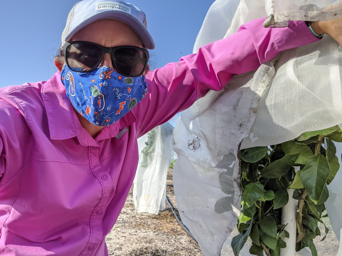 @ConnieSchultz Masks in the field, masks in the greenhouse...need to take a lab pic now too. #GatorsWearMasks