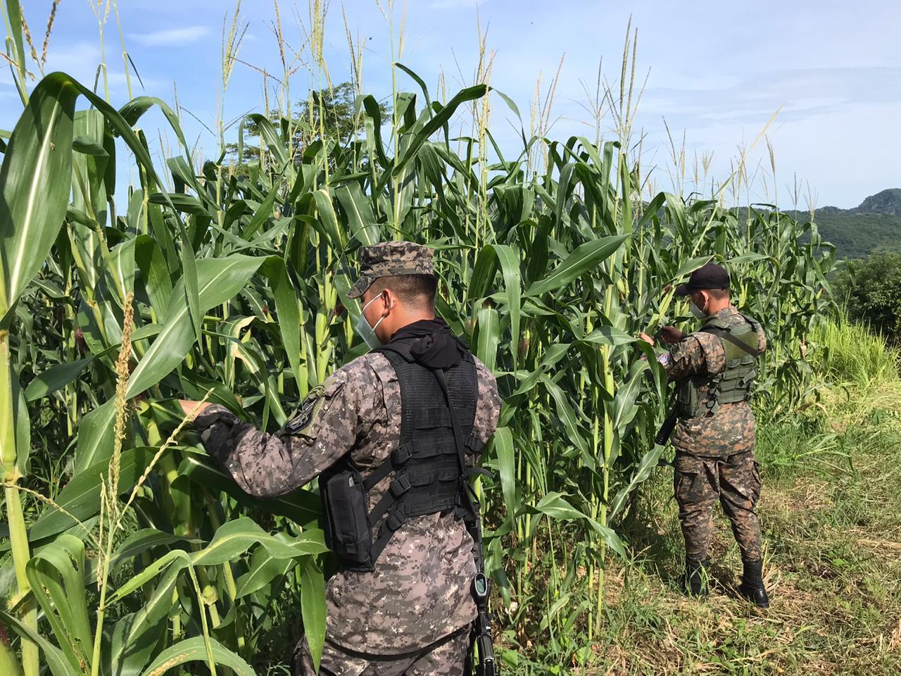 Ejército despliega a mil efectivos para combatir plaga de langostas
