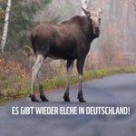 Image for the Tweet beginning: #Elche sind zurück in #Deutschland!