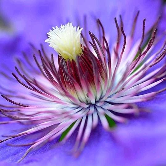 #bloemen #flowers #natuur #nature  #zomer #nikon #nikonfoto #naarbuiten #wandelen #macropic.twitter.com/tBgDj8UlMf