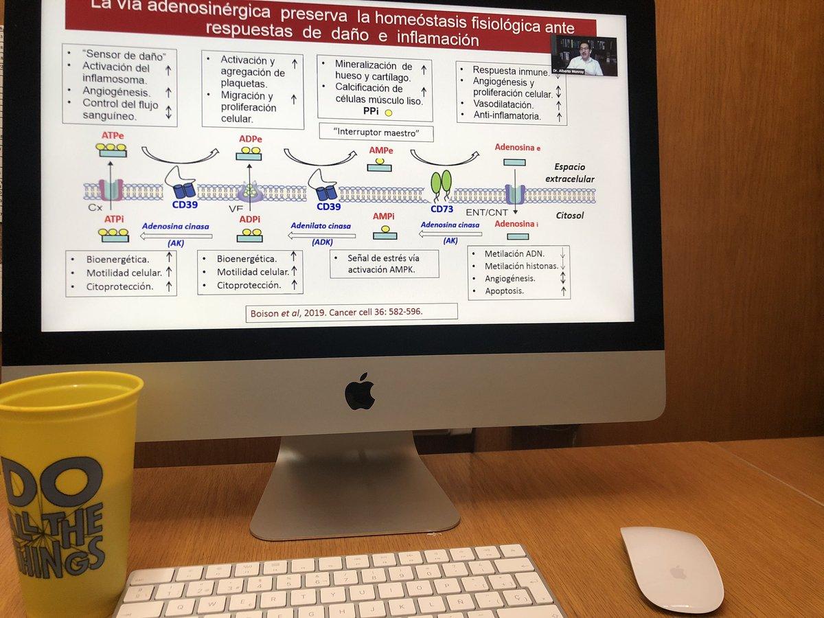 """#FelizMiércoles Seminario de la """"Unidad de #Investigación en #Enfermedades #Oncológicas""""   Interesantísimo este primer tema: """"La vía adenosinérgica, un mecanismo de regulación crítico en el desarrollo del #cáncer #cervicouterino""""   #Rafa #Balcázar #Narro #Tlalnepantla #EdoMéx https://t.co/uVR3QUmsRz"""