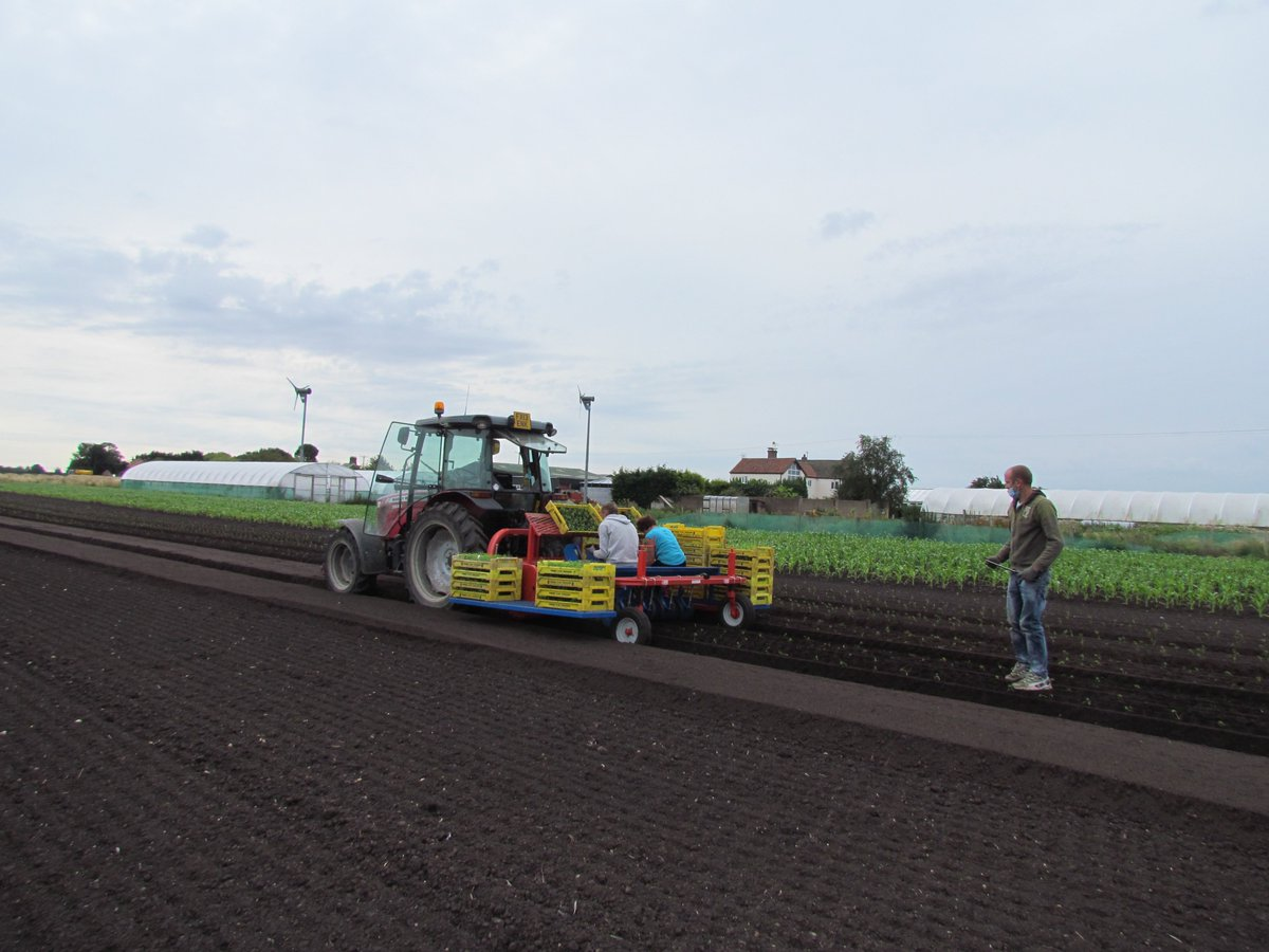 The last fennel of the season going in. Four more weeks of #lettuce20 planting left. Just where has the time gone?
