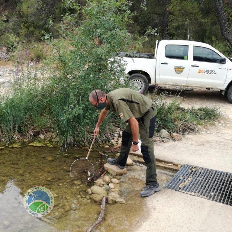 Los #AgentesProtecciónNaturaleza #APN del @GobAragon participamos con @agentsruralscat en el seguimiento e inspección de la calidad de las aguas del río #Algars tras un vertido de #purines de una granja de Horta de Sant Joan, Tarragona https://t.co/vJcOTVSdfY