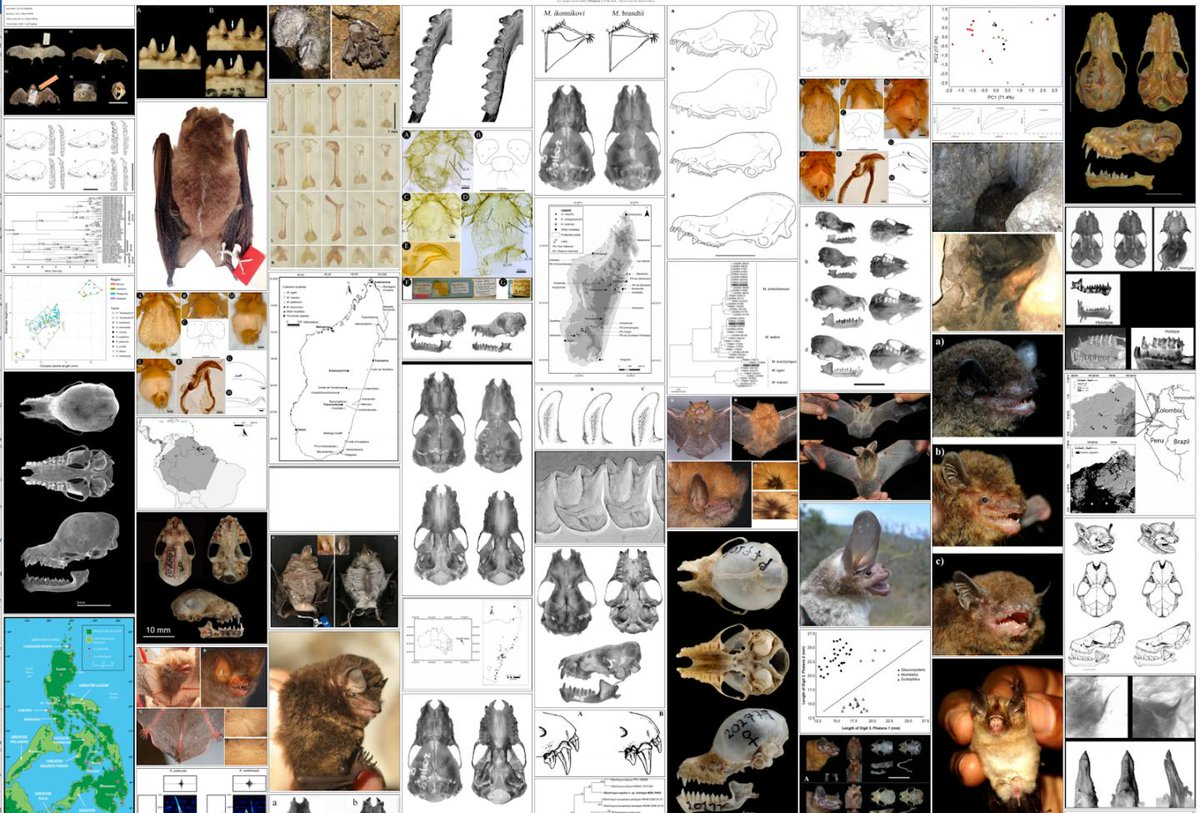 test Twitter Media - Our grantee @plazi_ch has been extracting data on #bats from the biodiversity literature to help uncover the possible origins of #Covid19. Read more here: https://t.co/nrDC48WP5x📸: Coronavirus-Host Community, scientific illustrations liberated from scholarly publications. https://t.co/LaDPmGZRW2