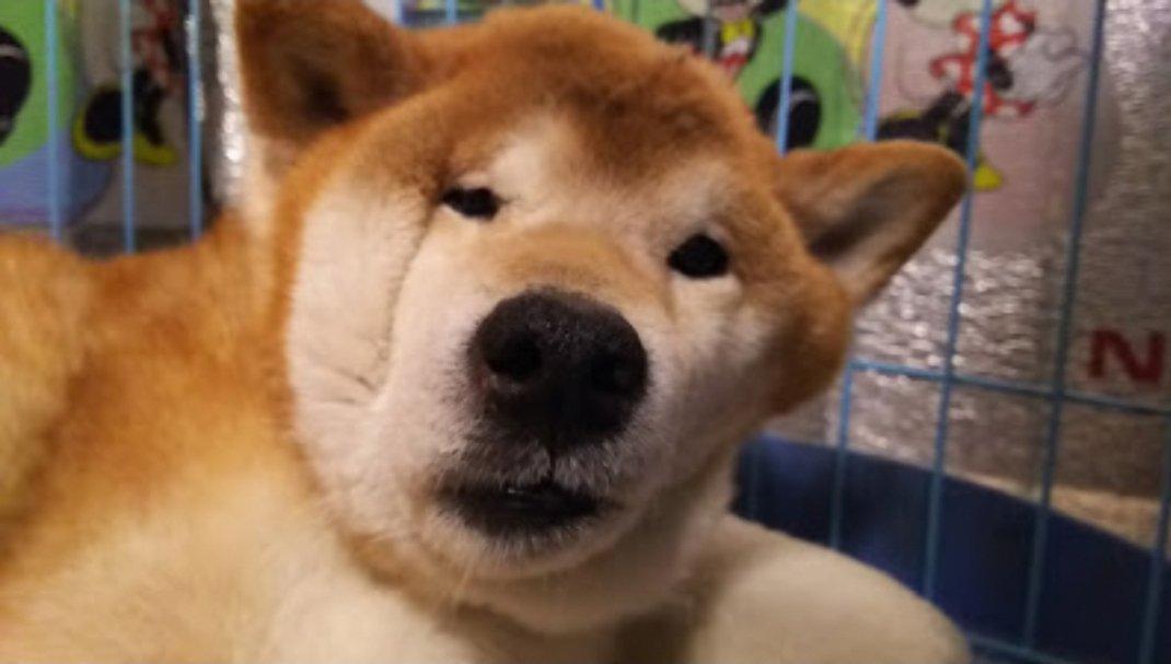 寝起きに異変?飼い主が愛犬の最強のお惚け顔を激写!?