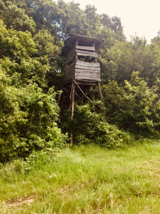 Field lookout's platform in rural #Hungary (Trans-Danubia). pic.twitter.com/NDT0XqXld3