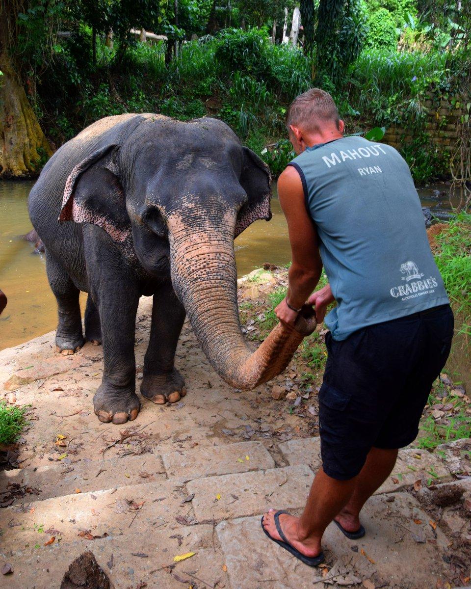 Lakshmi and her friend Ryan having a little moment of appreciation!  * #srilankanature #visitsrilanka #exploresrilanka #sosrilanka #wonderofasia #elephanta #elephantorphanage #elephantjournal #elephantvoices #loveelephants #walkwithelephants #elephantwalkexperience #wildlifepic.twitter.com/wAhrK8GdBD