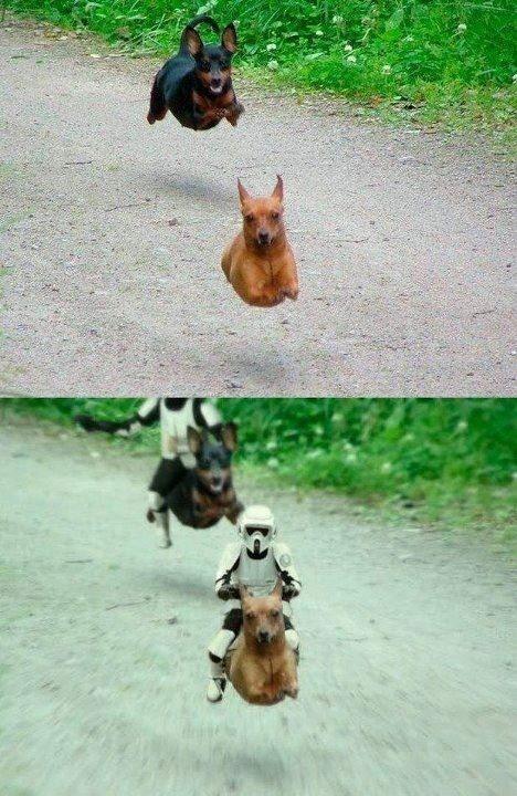 Pew Pew Pew...  . . . #starwars #endorbattle #battle #riding #meme #joke #funny #memes #starwarsmemes #nerd #geek #geeky #geeks #funnystuff #starwarsfun #stormtrooperpic.twitter.com/hk8ZxKs4wu