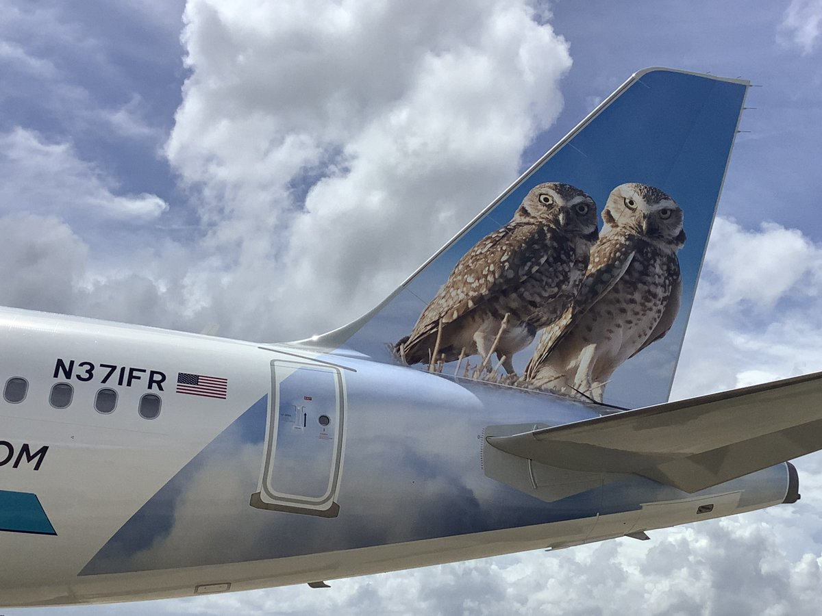 frontier airlines on twitter why are owls so handy they are a jack of owl trades this reigns true for the newest editions to our frontier family parish and daisy when twitter