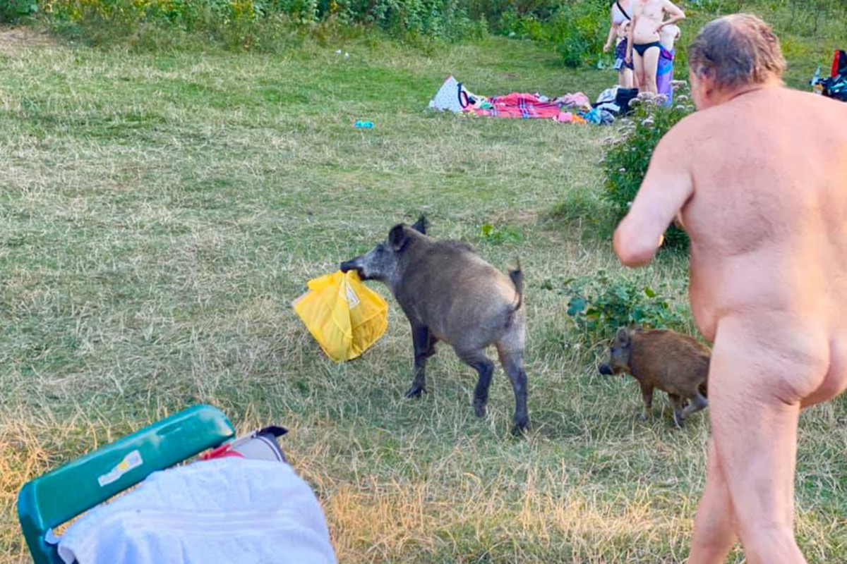 Butt-naked man caught chasing wild boar that stole his laptop trib.al/HWoWGSI