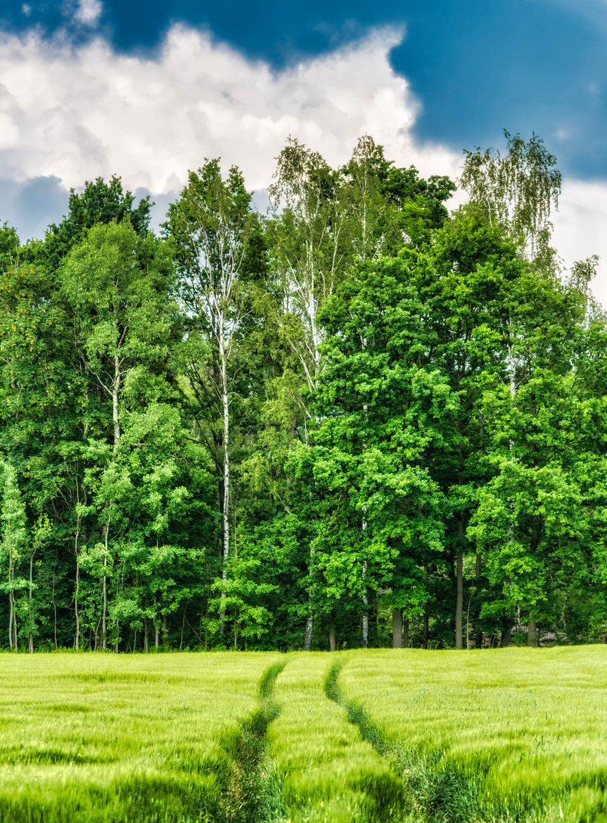 Fresh Friday: Your freshly edited photo early every Friday. #Luban #Poland #GreenHills #Trail #Path #Farmland #TallGrass #GrassyField #Green #FreshFriday https://t.co/RTGXbQwtuv
