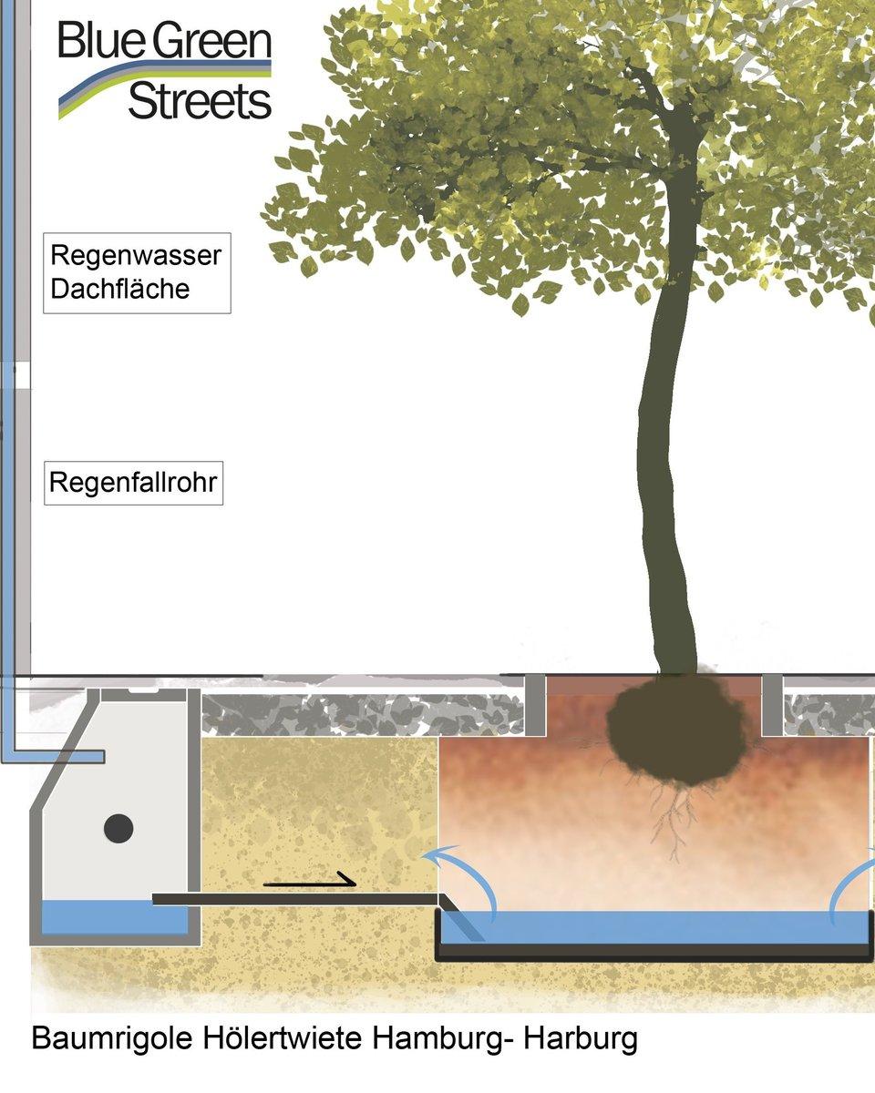 """test Twitter Media - Die Abteilung Stadtgrün des Bezirksamtes #Harburg ist für ihr Projekt """"Multifunktionale Klima-Baumstandorte"""" in der Kategorie Gepflegt mit einem #Preis ausgezeichnet worden.  👉 https://t.co/qXFfouiXmY 📸: HafenCity Universität Hamburg  #BAHarburg #Stadtbäume #Klimawandel https://t.co/jN8WKv3qWO"""