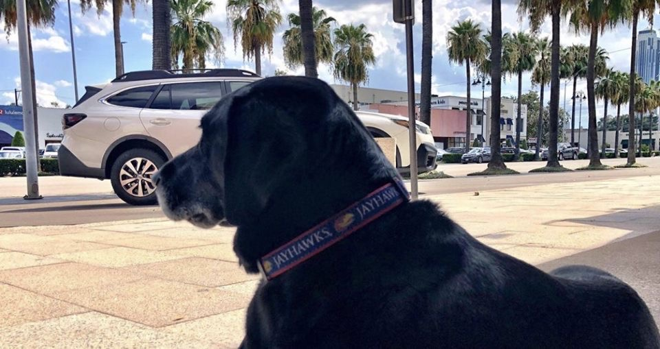 There are two things Hank likes in this   1. Birthday Sprinkles Pupcakes 2. His 2020 Subaru Outback https://bit.ly/2ELRekG  #Subaru #Subie #subieflow #subienation #subilove #HTX #houston #houstontx #clearlake #carsales #cars #carsforsale #autosales #car #cardealershippic.twitter.com/7zQDOcLbpz
