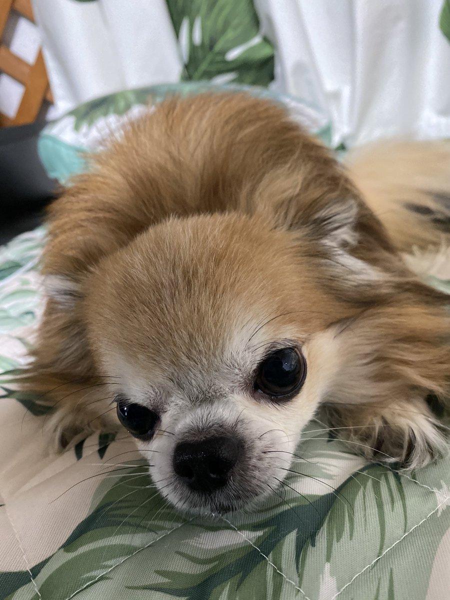 @takamin_2525 @Yu_1217_aichan @yuki_2525_puni_ すまぬな。( ◜௰◝ ) お詫びとして愛犬の画像あげるから… https://t.co/SRLxSRnkd2