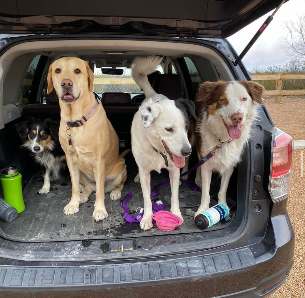 Dogs + Subaru is like PB&J!    Take a look at some of the pet-friendly amenities Subaru has to offer: https://bit.ly/2AELqtH   : @therightbeet   #Subaru #Subie #subieflow #subienation #subilove #HTX #houston #houstontx #texas #carsales #cars #carsforsale #autosalespic.twitter.com/8Go6vfLh4Z