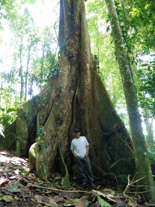 test Twitter Media - El cucharón es una de las +700 especies que evaluamos dentro del proyecto EAEV (Evaluación de Árboles Endémicos de Venezuela), coordinado por @Provita_ong en asociación con un importante grupo de botánicos del país 📸:  @Explora_ABD #EADV #ÁrbolesEndémicosVenezuela https://t.co/wxpQtMdUdf