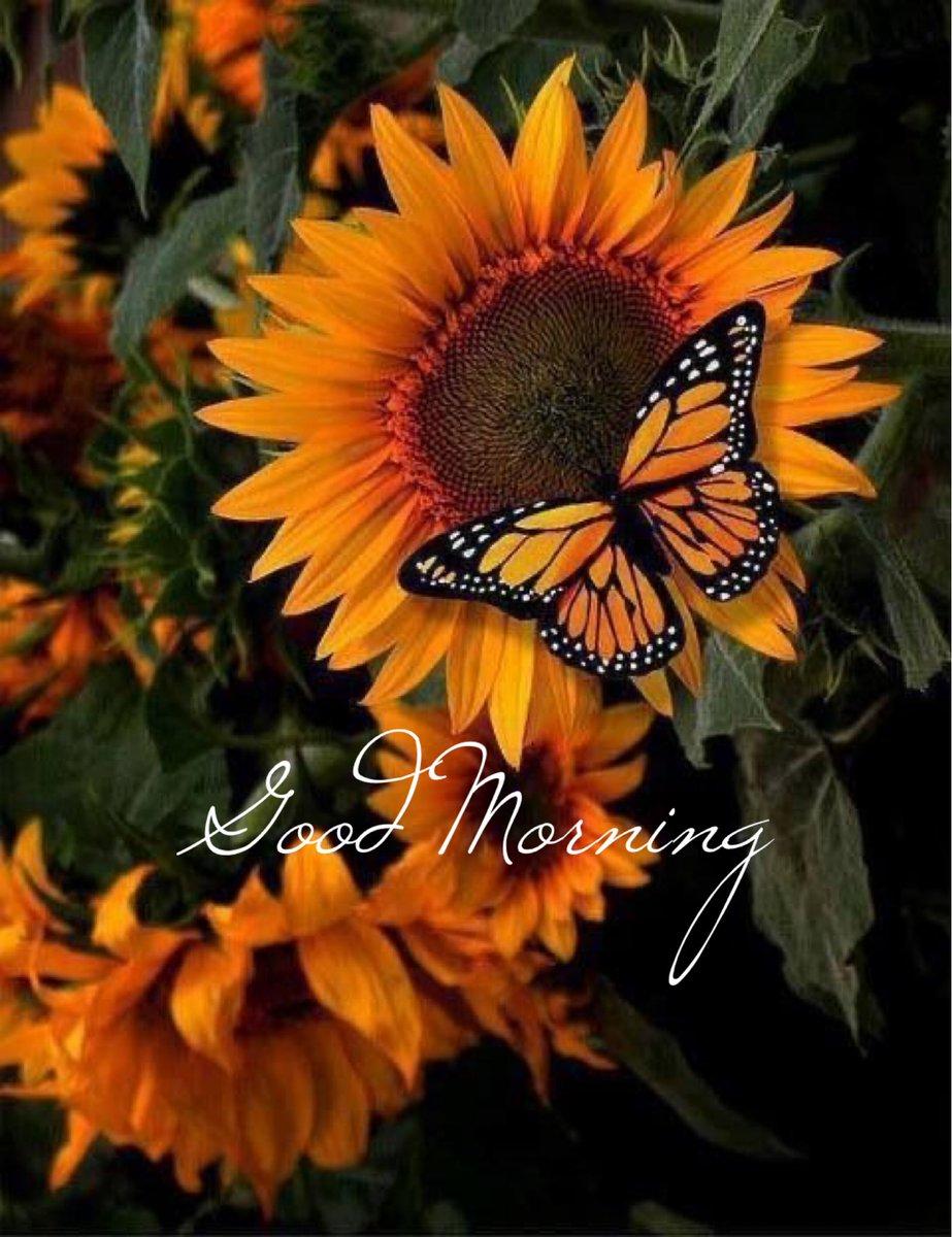 Good morning friends  #goodmorningpost #goodvibes #goodmorning #morning #morningvibes #saturdaymorning #saturdayvibespic.twitter.com/ljEy1zLnIz