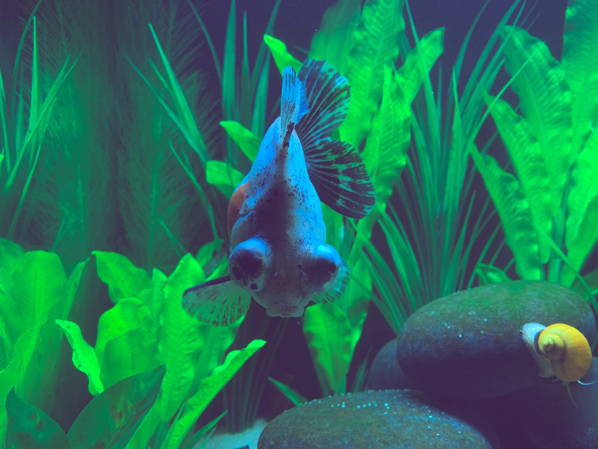 BB the demekin goldfish my #hobbies span far and wide pic.twitter.com/zdylYKnfBK