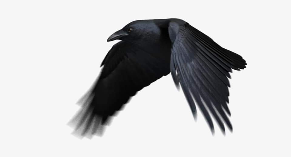 Raven model fully rigged and ready to animate  created by Triduza For full details check the link below :-  https://www.turbosquid.com/3d-models/3d-model-chihuahuan-raven-animation-flying/1137452?referral=hossamaldeen… #3dmodeling #rendering #vrayrender #3dsmax #3dmaxvray #vray #rendering3d #rivieramaya #renderings #vrayworld #autodeskmaya #mayapic.twitter.com/ku4ZcsapiZ