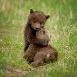 Image for the Tweet beginning: Let's help keep Jasper safe,