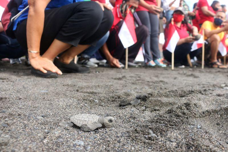 Thousands of baby turtles get first taste of the sea https://t.co/Wb5kYqJz3b https://t.co/GAsw8JYIGc