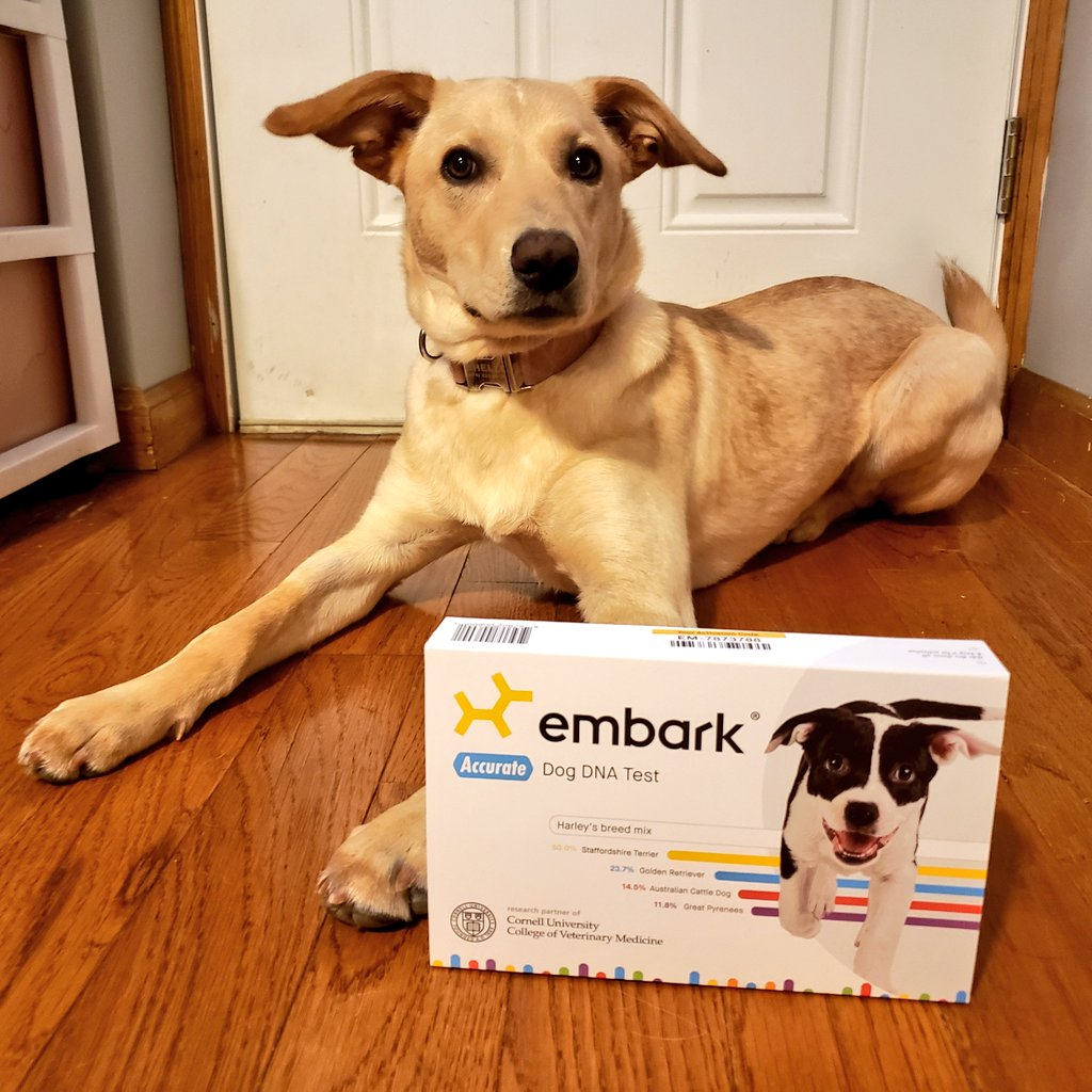 The Dogtor's @embarkvet test came in the mail! What do you guys think she is?!