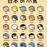 日本の小鳥。普段よく見る鳥たちものっています。かわいいイラストにいやされます。
