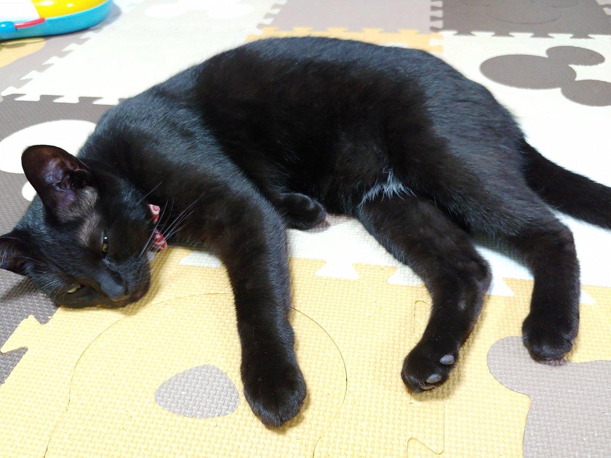 842日目。1歳児発熱のため保育園早退。帰宅するとまさかこんな時間に帰ってくると思ってなかったらしい黒猫が慌てた感じでお出迎え。キジトラは「この時間に帰ったところですぐごはんでは無い」と顔を出さなかった。多分昼寝の最中だったらしい黒猫は、暫くするとマットに横になり、昼寝再開した。