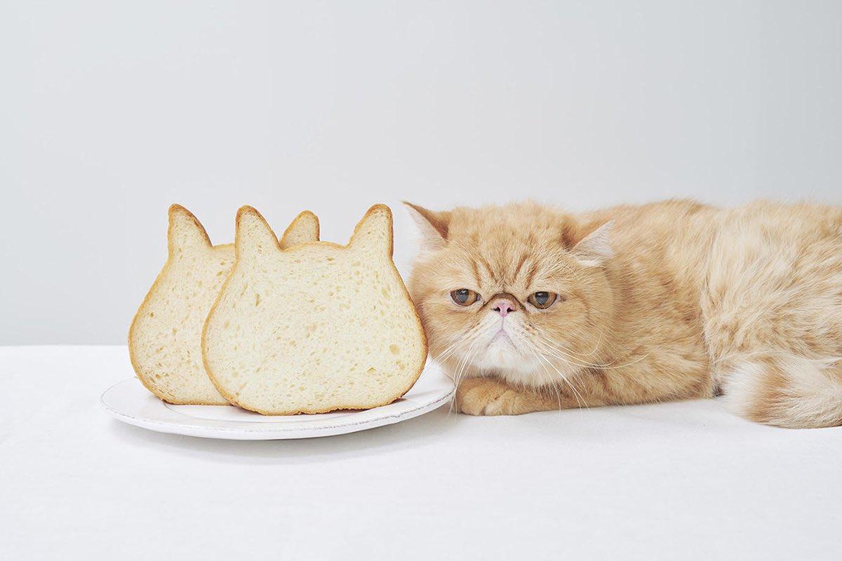 """""""ねこの形""""と美味しさに癒される!たっぷりミルクの本格派食パン専門店「ねこねこ食パン」#世界猫の日"""