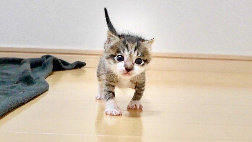 ね お の 保護 猫 こ た ちゃ