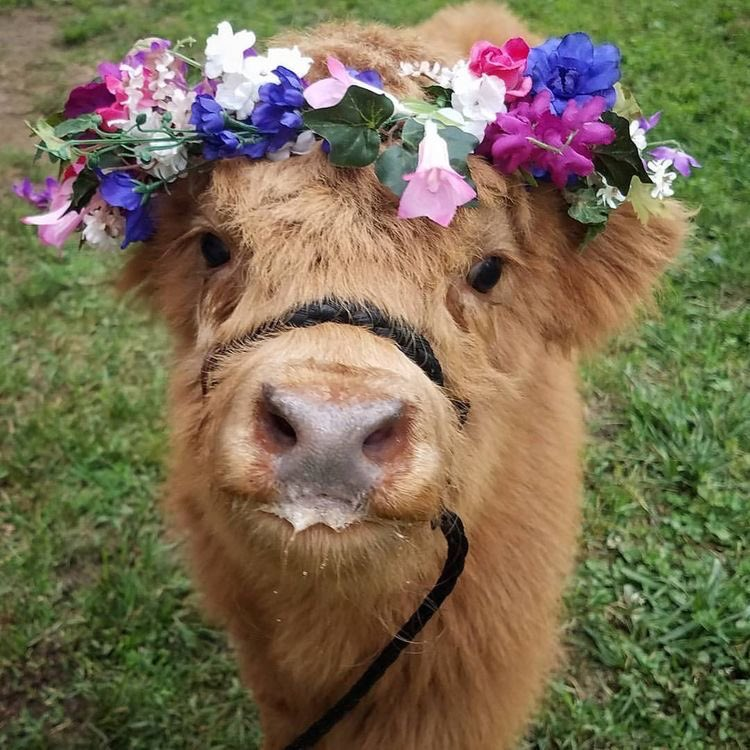 and flower crowns