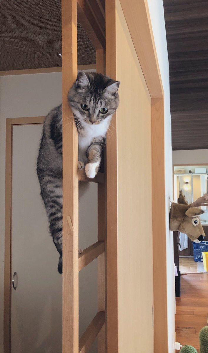 「これこれ そこな人 今日はなんの日かご存知かな?」#世界猫の日
