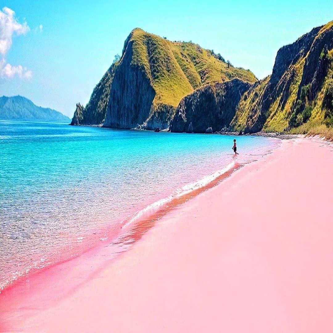 Nothing beats Indonesia's pink beaches :@hendrickhartono  #paradisebeach #naturecapture #travelfamily #cocoabeach #naturelove_world #paradiseonearth #beachy #paradises #naturescape #traveller #worldtravelling #travellingthroughtheworld #nature_captures #nature_specialistpic.twitter.com/EFvBGVr7Zy
