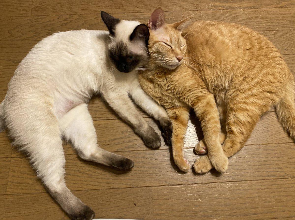 #世界猫の日みーんなが幸せでありますように❣️3枚目はなみを咥えて我が家に置いて行ってくれた地域猫ココいつか我が家の子にします。