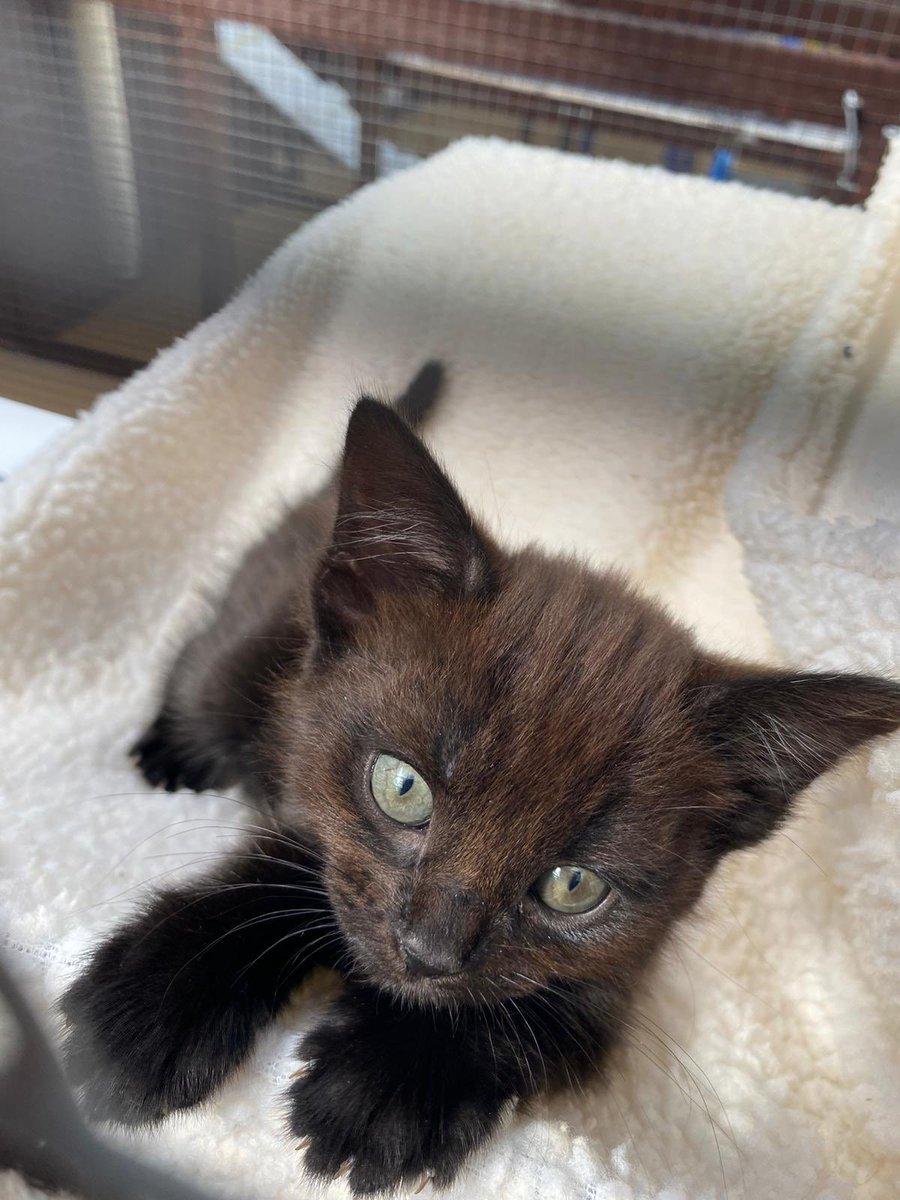 Cherwell Cats Protection Cherwellcats Twitter