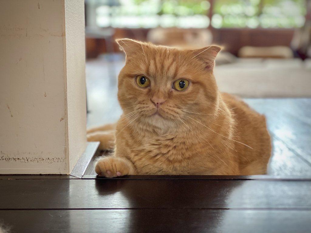 幸せをありがとう#世界猫の日